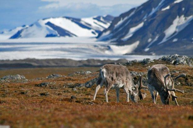 Factores bióticos y abióticos de la tundra | eHow en Español
