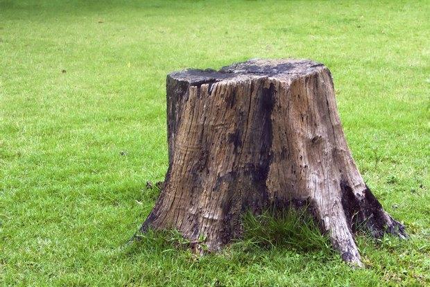 Resultado de imagen de tocón de árbol