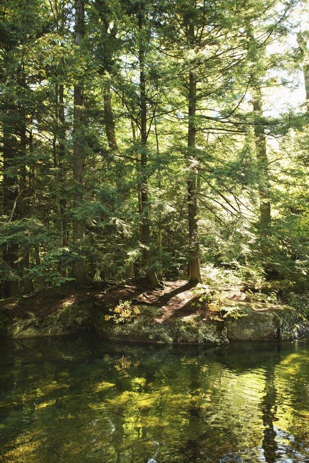 Qu es un bosque templado  eHow en Espaol