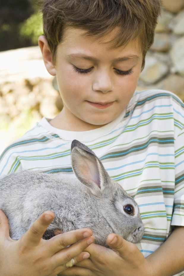 qu tipos de conejos son buenos para criar con nios pequeos