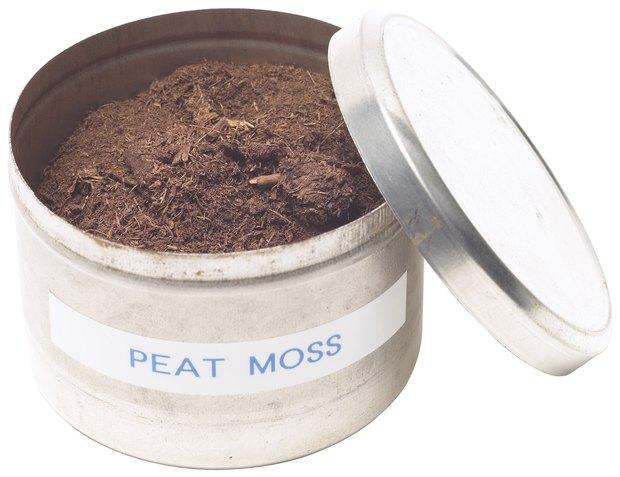 cuál es la diferencia entre musgo de turba y tierra para macetas