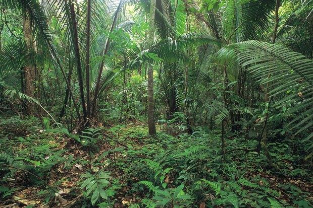 del suelo de la selva