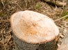 how to kill a stump naturally